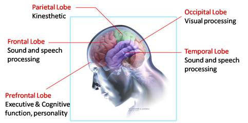 How reliable is Dermatoglyphics Multiple Intelligence ...